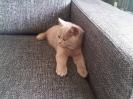 Kittens in hun nieuwe huis_1