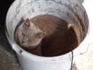 Kittens in hun nieuwe thuis