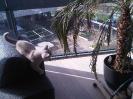 Kittens in hun nieuwe huis_2