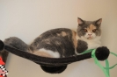 Kittens in hun nieuwe huis_3