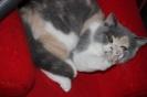 Kittens in hun nieuwe huis_6