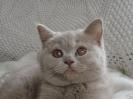 Kittens in hun nieuwe huis_7
