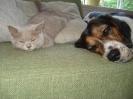 Kittens in hun nieuwe huis_8